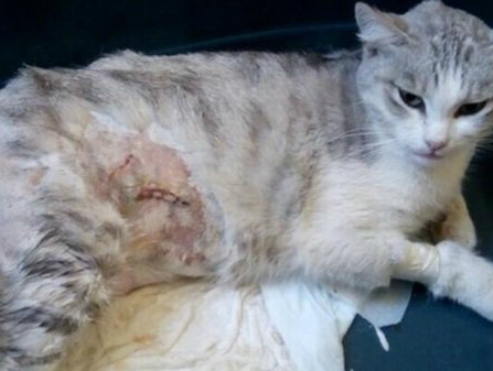 В Таганроге на Русском поле десятилетний мальчик отрезал кошке уши и не только