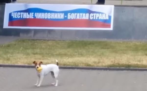 Жертвой антикоррупционного митинга в Таганроге стала резиновая утка