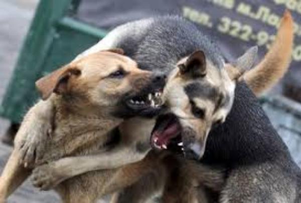 Вокруг бродячих собак в Таганроге кипят страсти