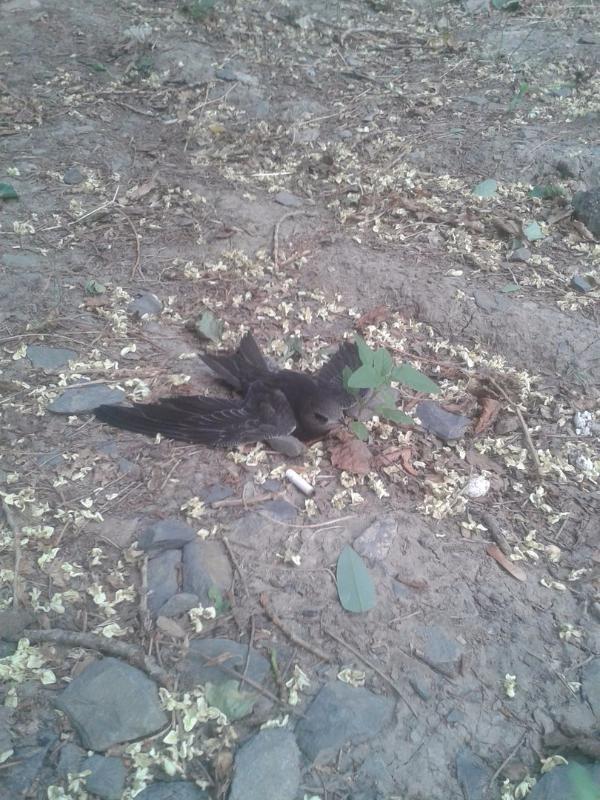 В Таганроге из-за сильного ветра с неба падали птицы