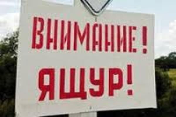 К Ростовской области подбирается вирус ящура