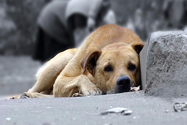 Зоозащитники Таганрога призывают горожан подкармливать животных в холода