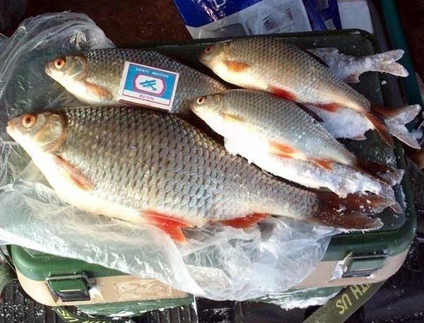 На подъезде к Таганрогу задержали автомобиль с живой рыбой