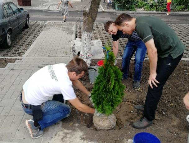 Волонтеры высадили туи возле детской площадки в Таганроге