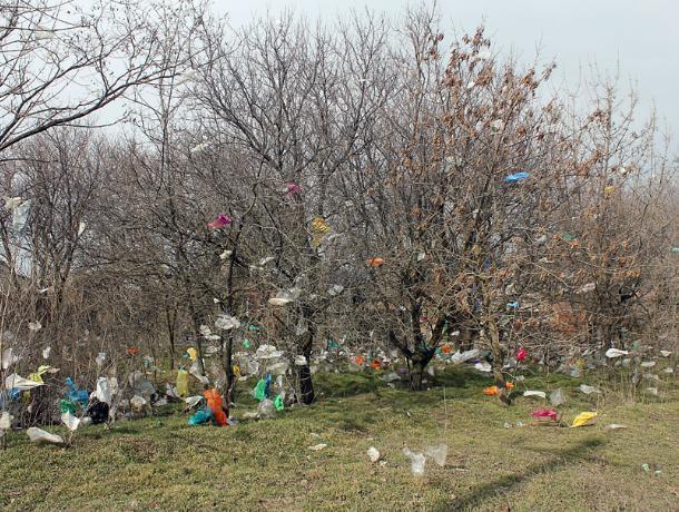 На 300 тысяч могут оштрафовать в Таганроге не вывозящие мусор фирмы