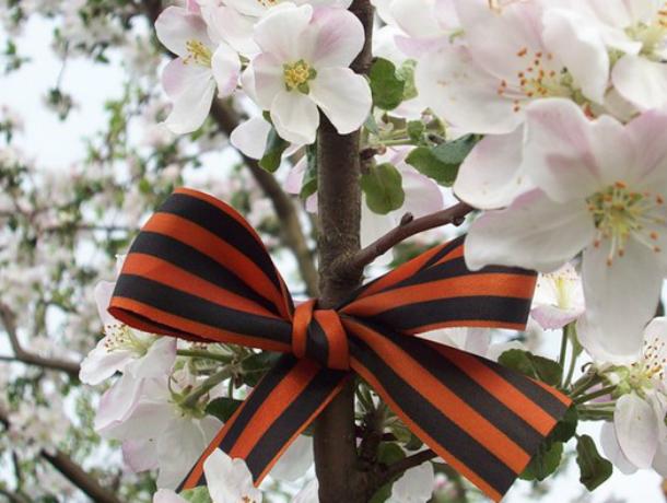 Музейный комплекс «Самбекские высоты» украсит  фруктовый сад