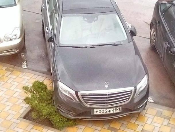 Наглый автохам в Таганроге не пожалел молодую тую, припарковался прямо на растение