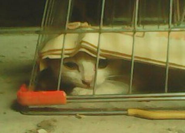 Судьбу котенка-воришки решали всем Таганрогом