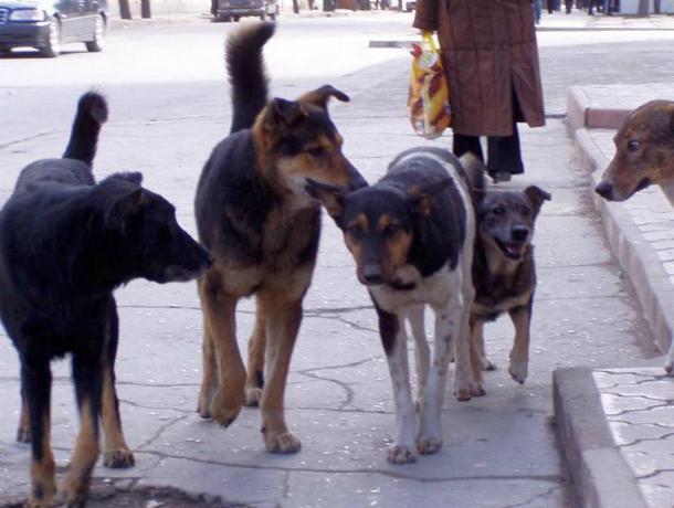Собаки продолжают грызть людей, жители ищут способы избавиться от них в Таганроге