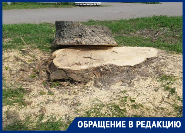 Под видом благоустройства в Таганроге уничтожается зеленый сквер