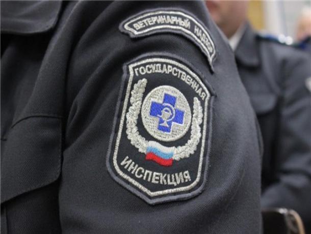 Под Таганрогом житель вызвал ветеринаров и получил штраф