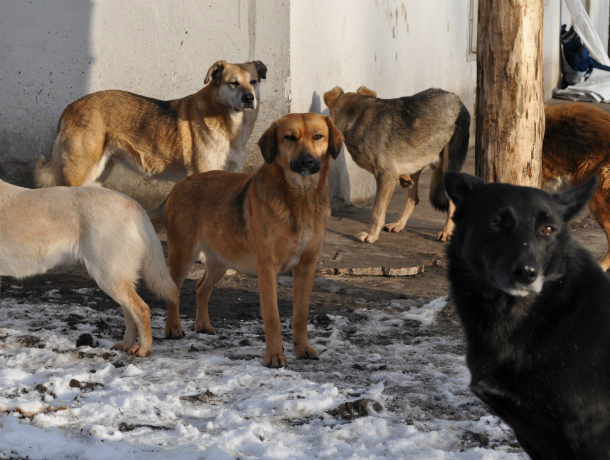 Петиция в защиту бездомных животных набрала более 1 млн 450 тысяч подписей