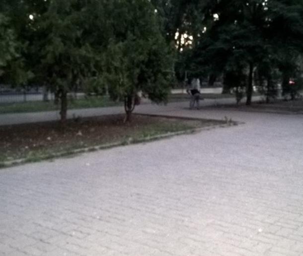 Таганрогский малый бизнес научился мести дороги