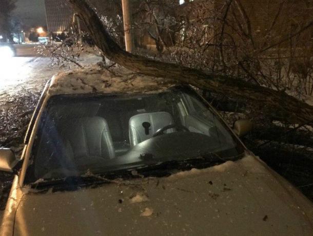 Старое, обледеневшее дерево сломалось и упало  на машину в Таганроге
