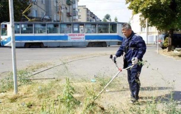 Первые лица Таганрога лично вышли на борьбу с сорной травой