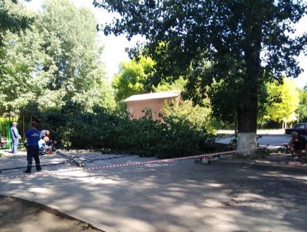 В Таганроге очередное дерево не выдержало благоустройства и сломалось