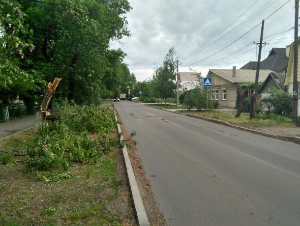 Таганрогские службы дерево с дороги убрали, а на тротуаре оставили