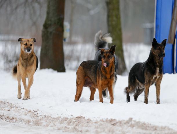 Бросающие своих собак таганрожцы, могут получить наказание