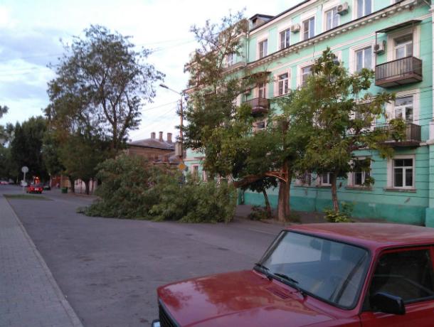 «Легкий бриз» свалил огромное дерево на Октябрьской площади в Таганроге