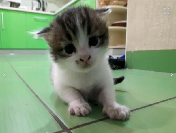 Таганрожец продает котенка с мистическими силами почти за миллион