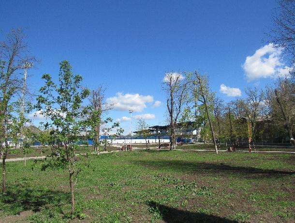 Сквер «Памяти» в Таганроге безжалостно вырубили и «позабыли» посадить, что обещали