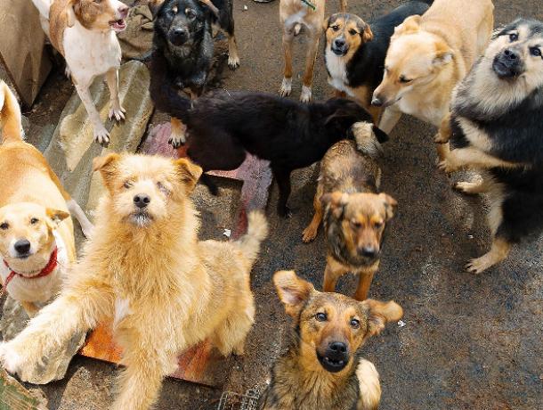 «Бася» оставит в покое таганрогских бродячих собак