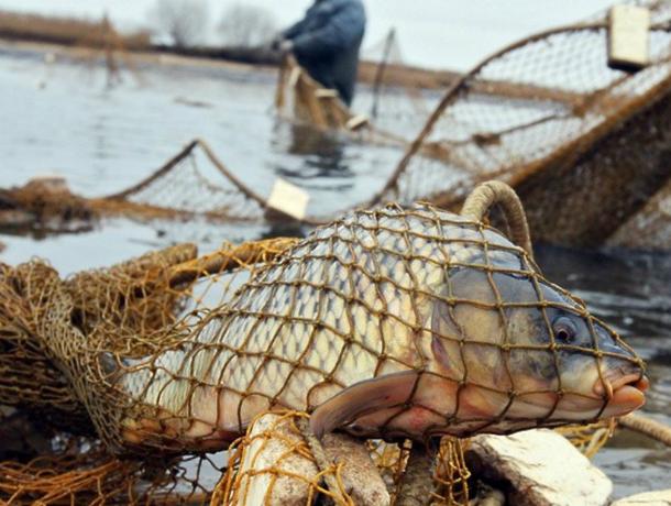 В Таганроге усердно ловили браконьеров