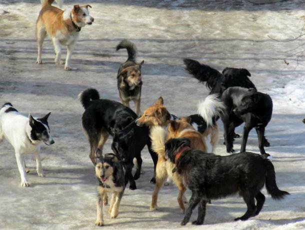 «Бася» будет отлавливать собак в Таганроге