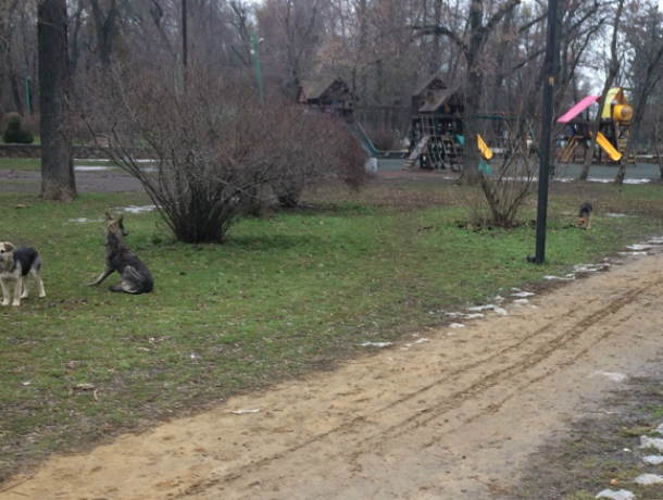 В парке им Горького в Таганроге бродячие собаки кинулись на ребенка