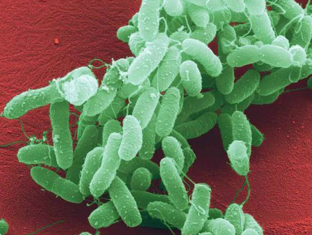 Бактерии смертельной  болезни угрожают таганрожцам в Азовском море