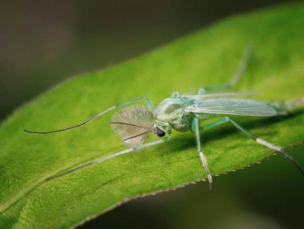 Полчища зеленых комаров пугают и  держат в страхе  жителей Таганрога