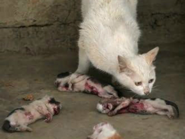 Десятилетний живодер продолжил зверски издеваться над животными в Таганроге