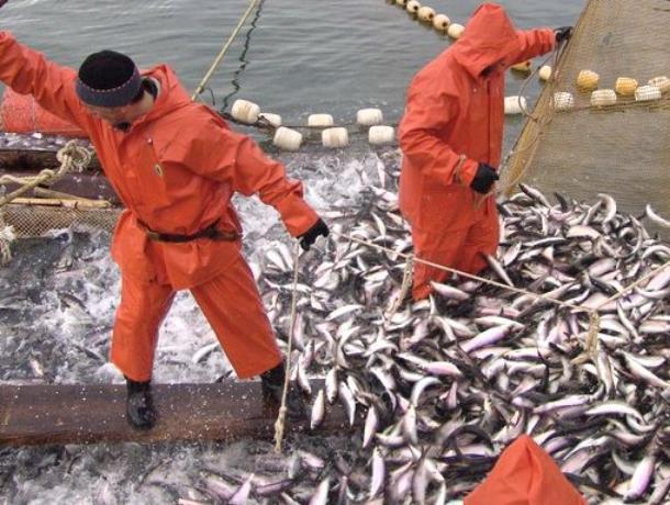 Рыбакам Таганрогского залива разрешили ловить леща и пиленгаса
