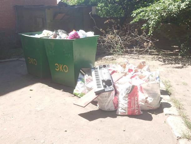 На территории депутата ЗС РО  В.Карагодина, ныне кандидата в Донской парламент,  процветают амброзия и свалки с мусором