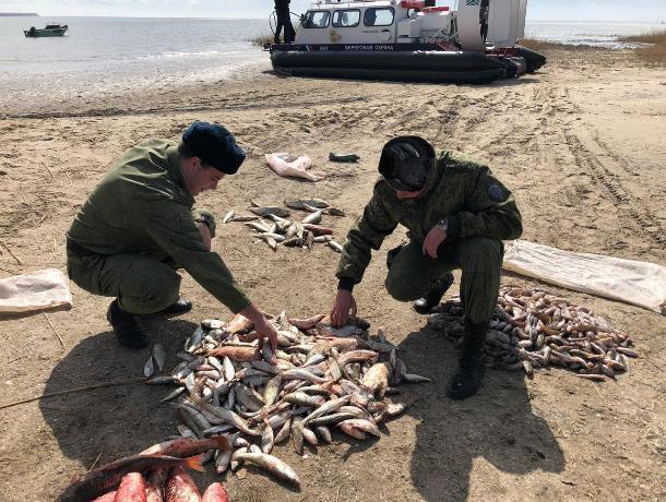 Браконьеры не прекращают незаконный вылов рыбы под Таганрогом
