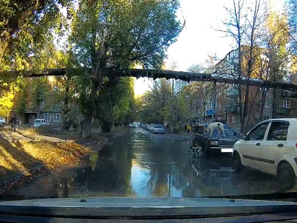 В Таганроге бездомные собаки спасались от потопа на припаркованном авто