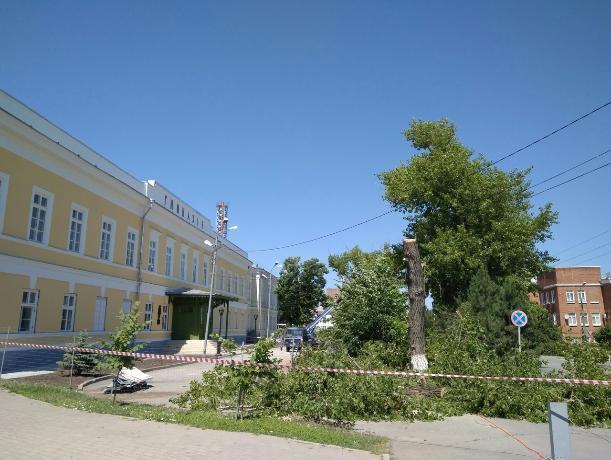 Таганрожцы бьют тревогу: возле чеховской гимназии спиливают деревья