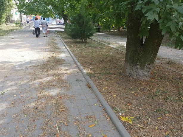 Долгожданный покос травы разочаровал таганрожца
