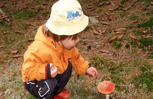 ВРостове ототравления грибами скончался 5-летний ребенок