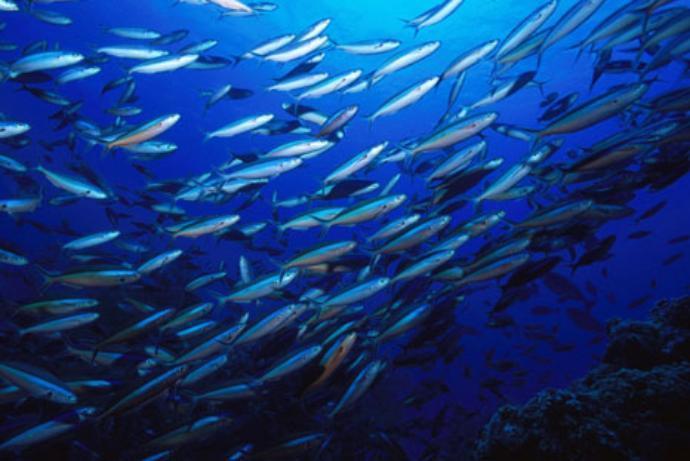 Таганрогские ученые научились контролировать поведение рыб