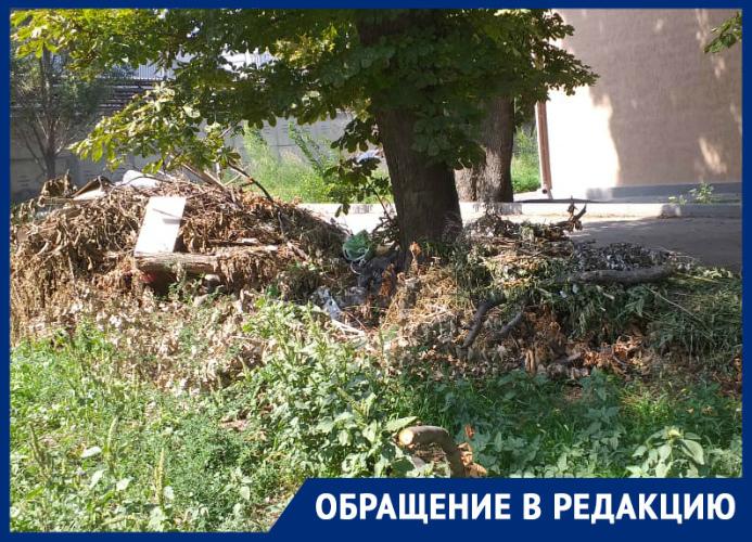 Жители ул. Социалистической в Таганроге жалуются на вонь с «Тагмета», амброзию и равнодушие властей