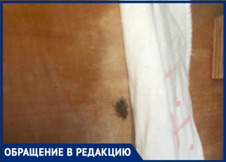 В таганрогском детском саду каждое утро начинается со встречи с тараканами