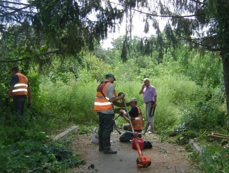 Прошли и продолжаются торги по кошению зловредной травы в Таганроге