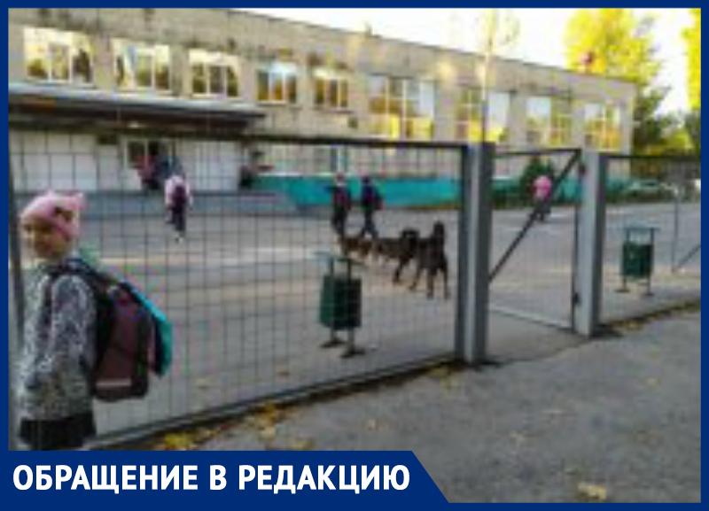 Детей из школы, где обучалась главы города Таганрога И.Титаренко, атакуют стаи собак