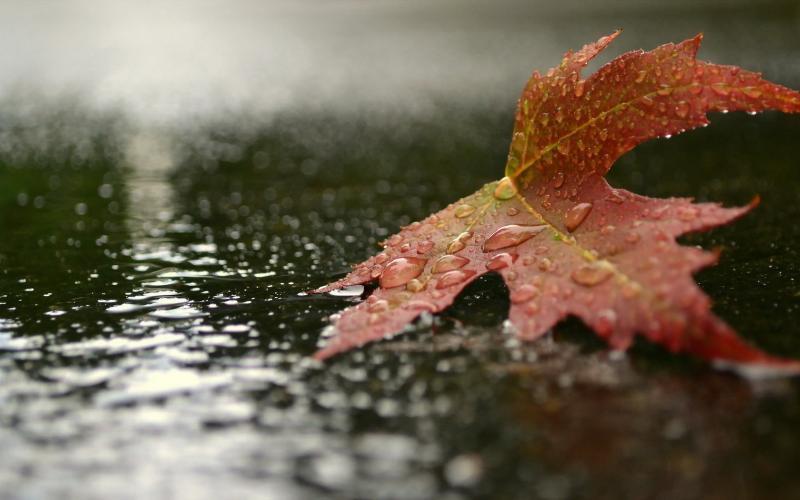 В Таганроге на следующей неделе запахнет осенью
