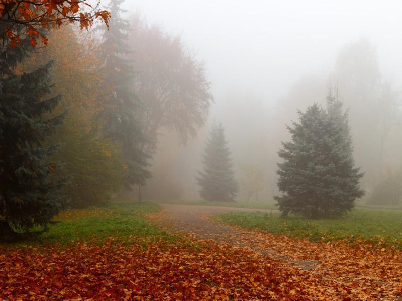Погода в Таганроге в ближайшие дни будет стабильной и туманной