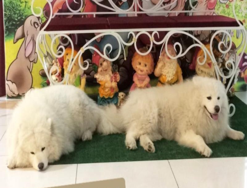 Таганроженка считает издевательством фотосессии с собаками