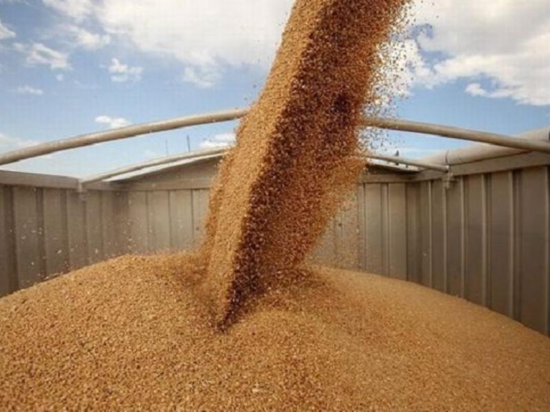 Из Таганрога чуть не отправили 20 тысяч тонн зараженного зерна на экспорт