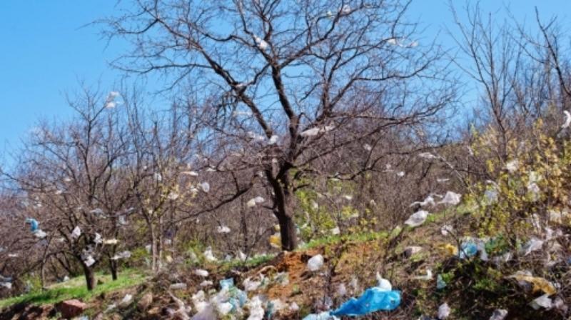 Таганрожцам придется учится жить без пластиковых пакетов