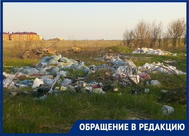 В Таганроге нормальной жизни птах мы мешаем своим мусором и безразличием